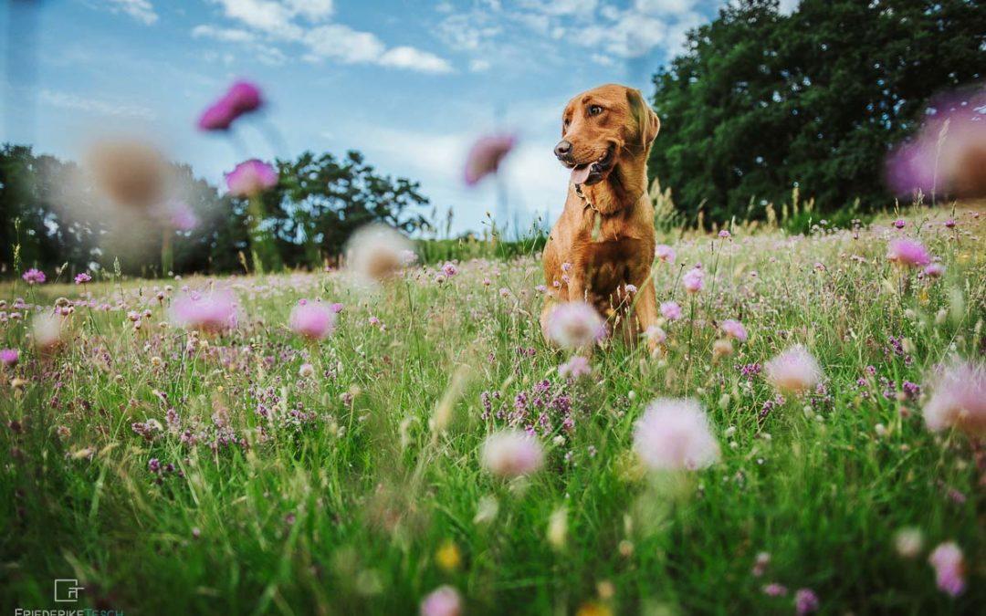 TIER-FOTOGRAFIE | Romy & Pippa