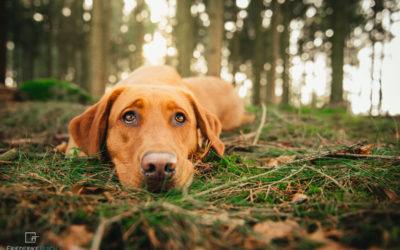 Hundefotografie | Pippa 2.0