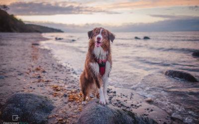 Hundefotoshooting | Pippilotta